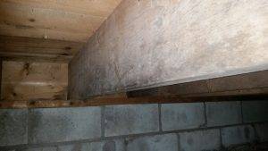 Basement in North Carolina showing signs of mold.