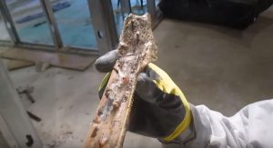 Mold on Wooden Flooring Hero Mold Company Martinsville, VA