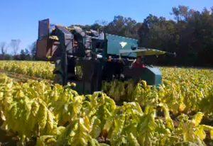 Tobacco Crops Wilson, NC Hero Mold Company