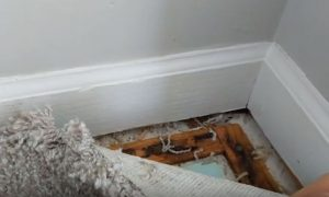 Mold under Carpet Hero Mold Company Eden, NC