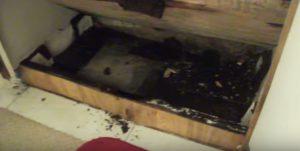 Black Mold Under Sink Hero Mold Company Wilson NC