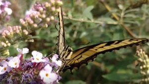 All-A-Flutter Butterfly Farm Hero Mold Company High Point NC