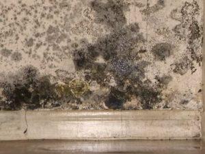 Black Toxic Mold Hero Mold Company High Point NC